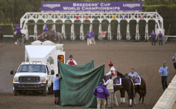 This Nov. 2, 2019, file photo shows track workers treating Mongolian Groom after the Breeders' Cup Classic horse race at Santa Anita Park, in Arcadia, Calif. Breeders' Cup Classic. A report released Tuesday, March 10, 2020, by the California Horse Racing Board on a spate of horse deaths at Santa Anita found that no illegal medications were used on the animals and 39% percent of the 23 fatalities occurred on surfaces affected by wet weather. The long-awaited report focused on 23 deaths as a result of racing or training between Dec. 30, 2018, and March 31, 2019. The fatalities roiled the industry and led track owner The Stronach Group to institute several reforms involving safety and medication. (AP Photo/Mark J. Terrill, File)